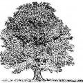 arbre-laicité