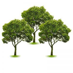 pack-3-arbres