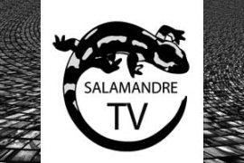 Salamandre TV : Chemins d Orient et d Occident avec Marc Sokol