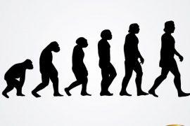L'ÉVOLUTION HUMAINE